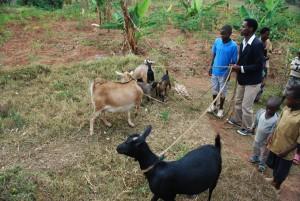 Rwanda-2014-543