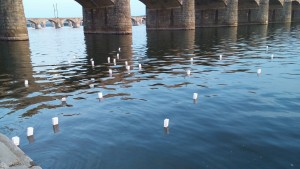 Lanterns float down the Susquehanna River following the 'Candles on the Water' ceremony in Harrisburg.