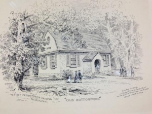 Old Buttonwood